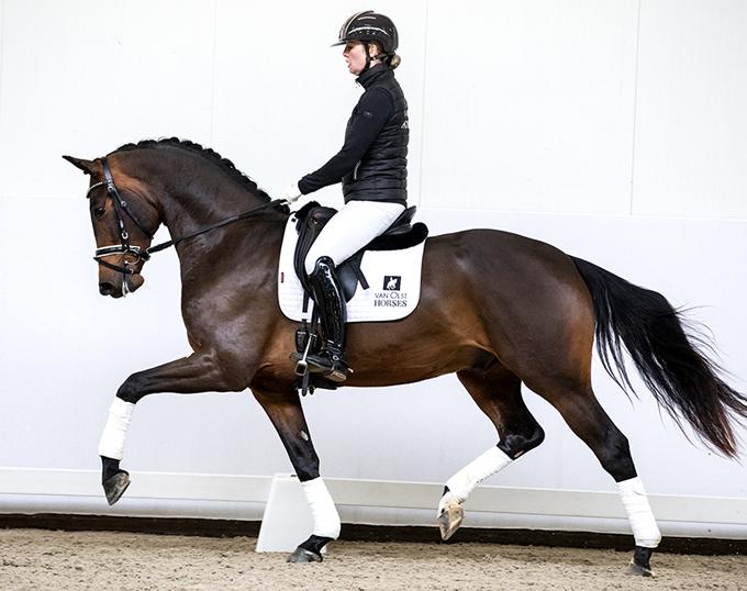 2019 Van Olst Sales' Horse in the Spotlight: Legolas T