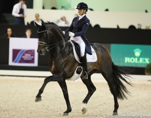 KWPN Licensed Grand Prix stallion Apache - All KWPN stallions will be tested for WFFS :: Photo © Astrid Appels