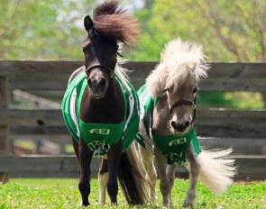 Meet Star & Huck, the Official Mascots of the 2018 World Equestrian Games