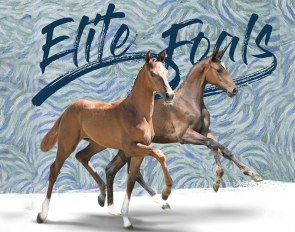Future Champions at the 2018 Oldenburg Elite Foal Auction In Vechta on 25 August 2018