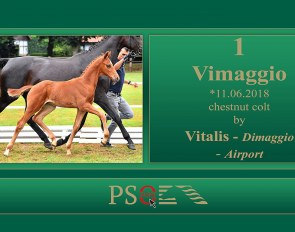 Hanoverian colt Vimaggio (by Vitalis x Dimaggio) is part of the 2018 PS Online Foal Auction Collection