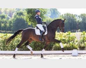 Centurion, aka Caruso, price highlight of the 2018 Equine Elite Auction