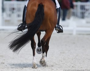 Dressage legs :: Photo © Astrid Appels