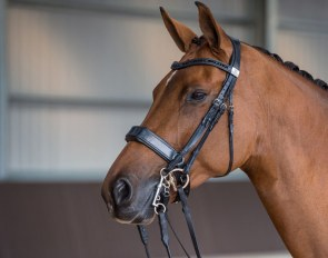 The unique and innovative Fairfax performance bridle
