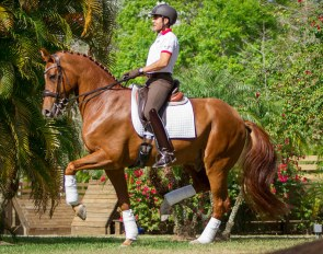 Cesar Parra and GK Dancing Rubies at Piaffe Performance Farm's winter base in Jupiter, Florida