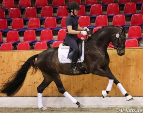 Elfenliebe (by Furstenball x His Highness) at the 2019 Oldenburg mare performance test in Vechta :: Photo © LL-foto