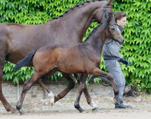Colt by Zoom x Fidertanz