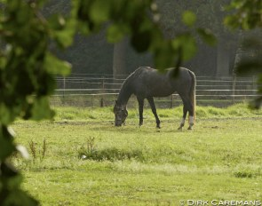 Grazing on autumn pasture :: Photo © Dirk Caremans