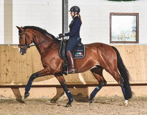 Dorothee Schneider on Liliano OLD: a photo of a young horse in the desired frame with the rider with a relaxed leg position that allows for the movement to flow :: Photo © Jan Reumann