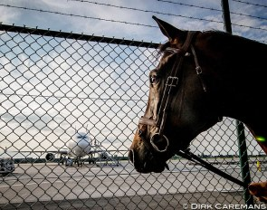Horse looking at the cargo plane in Liège, Belgium, that will take it to the 2016 Olympics in Rio :: Photo © Dirk Caremans