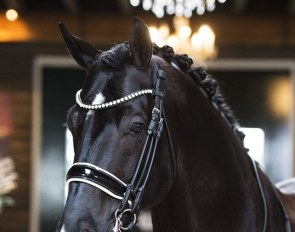 Excellent Black is part of the 2020 Excellent Dressage Sales Collection