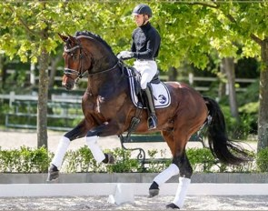 Francois - 6-year old Hanoverian by Franziskus x Brentano II x Weltmeyer :: Photo © Anett Somogyvari
