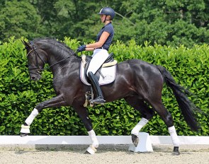 Brilliant, this stunning dressage star by Baccardi x Samarant x Floresco, is part of the Rüscher-Konermann Online auction