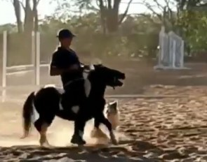 Brazilian Olympian Leandro Aparecido da Silva and his 20-year old son have abused this pony on several occasions by roughly riding it, jolting the bit in its mouth, and almost breaking its neck with a rotational fall over a jump.