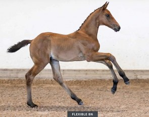 Flexible BN (by Franklin x Don Primero)