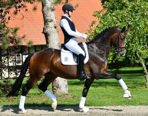 Frederic Wandres on Gremlin (by Grey Flanell x Donnerschwee x Wolkentanz II)