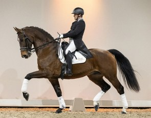 Dancer Again (by Prestige VDL), Portuguese small tour champion, is part of the 2021 Excellent Dressage Sales collection