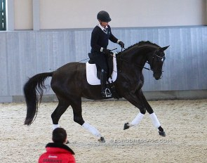 Werth riding a 4-year old Superb at the 2016 Global Dressage Forum in Hagen. Werth's interesting riding style on young horses: long reins, hands wide apart, clicking voice... but the contact was always light and unforceful :: Photo © Astrid Appels