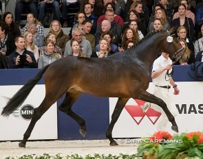 Jambeau at the 2017 KWPN Stallion Licensing in Den Bosch :: Photo © Dirk Caremans