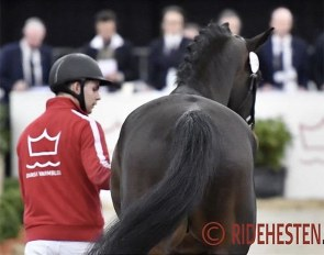 Danish warmblood stallion licensing :: Photo © Ridehesten