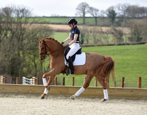 FEI Dressage pony German Highlight