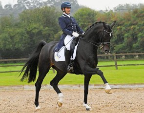 Rising Grand Prix horse Saint Julian (by Sandro Hit x Donnerhall)