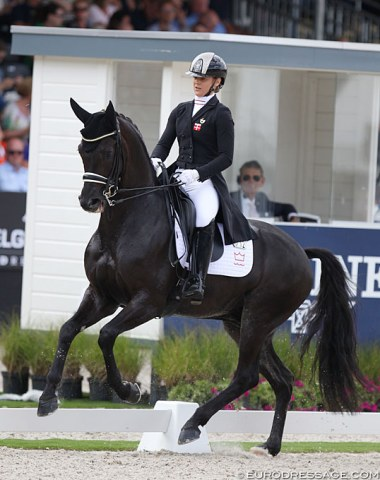 Danish GP team rider Anna Zibrandtsen has another big star for the future: UNO Don Olympic (by Don Olymbrio x Del Piero). Stunning horse with incredible gaits, but still very green for the level