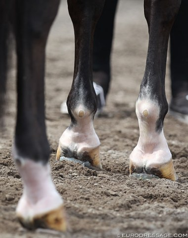 Lots of horses in Wellington have shoes with extra padding