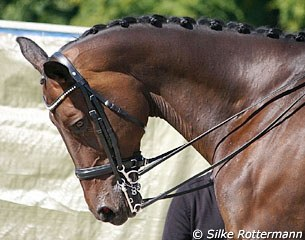 Horse with a Baucher snaffle in the double bridle