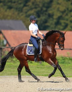 Veronique van Beukelen on Silvia Rizzo's 3-year old Oldenburg bred Donnerbaldo (by Donnerbube 2)