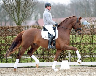 Andreas Müller on Lodbergen's newest stallion La Vie (by Livaldon x Scolari) :: Photo © Tanja Becker