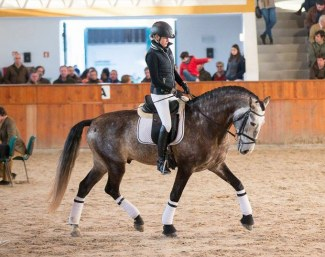 Angelique Hofman and Iberico das Lezirias at the selection trial in Golega :: Photo © Rita Fernandes - Lusitano World