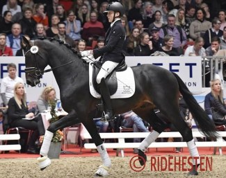Anders Hoeck and Hesselhojs Gnags at the 2018 DWB Spring Auction :: Photo © Ridehesten