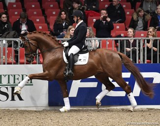 Severo Jurado Lopez on Springbank II VH at the 2018 Danish Warmblood stallion licensing :: Photo © Ridehesten
