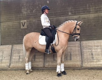 FEI Dressage Pony Mike