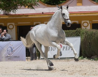 Norte at the PRE auction in Jerez on 13 May 2018 :: Photo © Azahara Perez