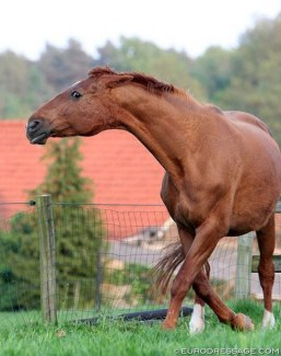 Angry mare defending foal :: Photo © Astrid Appels