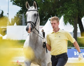 Breed shows, auctions and young horse championships in Verden :: Photo © Tilgner