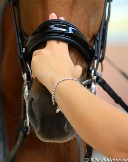 The two finger rule, according to the German guidelines, for how nosebands should be checked for tightness :: Photo © Silke Rottermann
