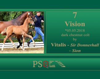 Vision (by Vitalis x Sir Donnerhall)