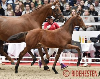 Worres Nina, top seller of the 2018 World Cup Herning Foal Auction :: Photo © Ridehesten