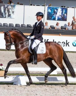 Hans Peter Minderhoud and Incognito at the 2017 Pavo Cup Finals :: Photo © Timo Martis