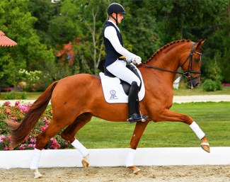 Bitcoin (by Bordeaux x Rubinstein x Don Primero), 2018 Oldenburg and German Young Horse Champion!