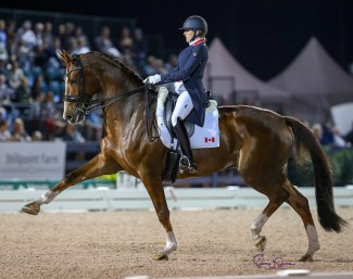 An almost five month pregnant Brittany Fraser-Beaulieu on All In at the 2019 CDI 5* Wellington :: Photo © Sue Stickle