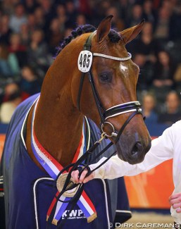 Handsome O, champion of the 2015 KWPN Stallion Licensing :: Photo © Dirk Caremans