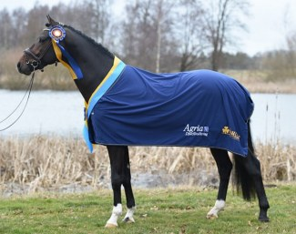 Kane wins the 2019 Swedish Warmblood stallion testing :: Photo © Yvonne Karlsson