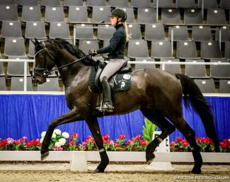 Lena Waldmann schooling Maracana at the 2019 Verden Stallion Sport Test :: Photo © Petra Kerschbaum