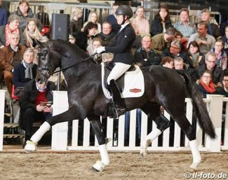 Benefit at a stallion show in Germany in 2018 :: Photo © LL-foto