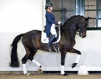 Charming Lady at the 2019 Excellent Dressage Sales