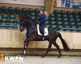 Livius (by Bordeaux x Vivaldi) at the 2019 KWPN Spring Stallion performance testing :: Photo © KWPN